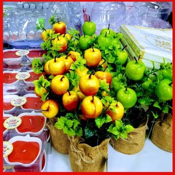 שיח תפוחים אדומים בעציץ יוטה
