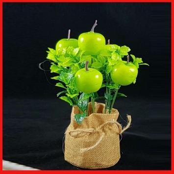 שיח תפוחים ירוק בעציץ יוטה